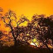 Sunset, Sabi Sand Reserve, Mpumalanga Art Print
