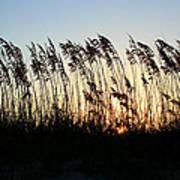 Sunset Sea Oats Art Print