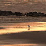 Sunset Shimmer Beach Art Print