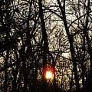 Sunset Through Trees Art Print