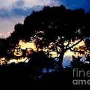 Sunset With Pine Tree Art Print