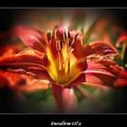 Sunshine Lily  Art Print