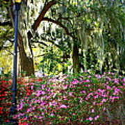 Sunshine Through Savannah Park Trees Art Print