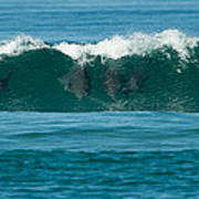Surfing Dolphins 2 Art Print