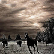 Surreal Horses Infrared Nature  Art Print by Kathy Fornal