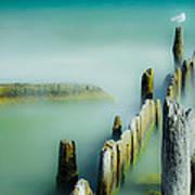 Surreal Sea Gull Art Print