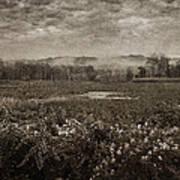 Suspended Over The Wetlands Art Print
