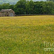 Swaledale Buttercup Meadow Art Print