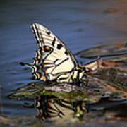 Swallowtail - Walking On Water Art Print