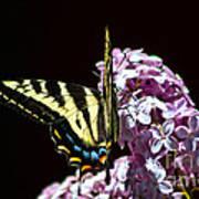 Swallowtail On Lilac 3 Art Print