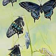Swallowtail Story Art Print
