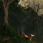 Swamp Fox Art Print