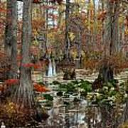 Swamp In Fall Art Print