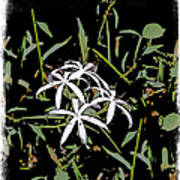 Swamplilies Art Print