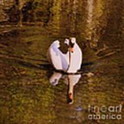 Swan At Susan Lake Art Print