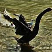 Swan Dance 2 Art Print