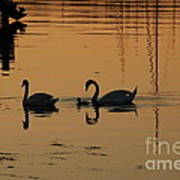 Swan Family At Sunset Art Print by Camilla Brattemark