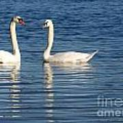 Swan Mates Art Print by Sabrina L Ryan