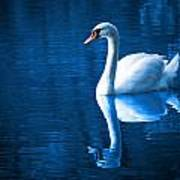 Swan On Lake Art Print