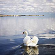 Swan Song Print by Vicki Jauron