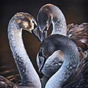 Swan Whispers Art Print