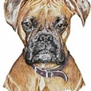 Sweet Boxer Art Print by Marla Saville