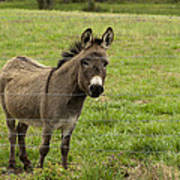 Sweet Little Donkey Art Print