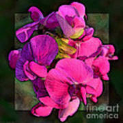 Sweet Pea Pop Out Photoart Square Art Print