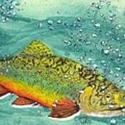 Swimming Upstream Art Print by Sheryl Brandes