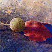 Sycamore Ball And Leaf Art Print