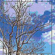 Sycamore Tree Branch Art Art Print