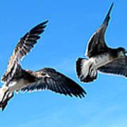 Synchronized Flying Art Print