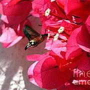 Taking The Nectar Art Print