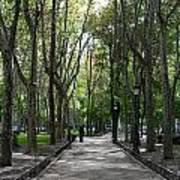 Tall Trees Of Madrid Art Print