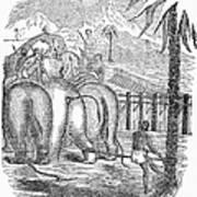 Taming Wild Elephants Art Print