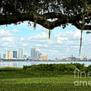 Tampa Skyline Through Old Oak Art Print
