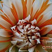 Tangerine Tinged Art Print