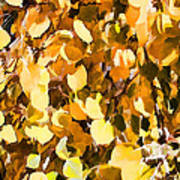 Taos Gold Iv Art Print