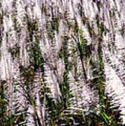 Tasseled Sugarcane Art Print