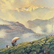Tea Picking - Darjeeling - India Art Print