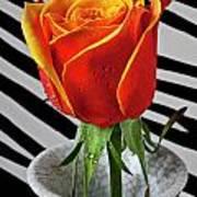 Tea Rose In Striped Vase Art Print