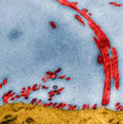 Tem Of Influenza Virus Art Print