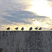Ten Seagulls Stand On Top Of Stucco Wall Art Print