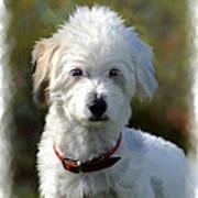 Terrier Dog Portrait Art Print