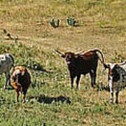 Texas Longhorns Panoramic Art Print
