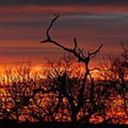 Texas Spanish Oak Tree  Sunset Art Print by Rebecca Cearley