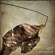Textured Leaf Art Print