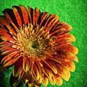 Textured Orange Flower Art Print