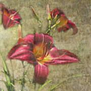 Textured Red Daylilies Art Print