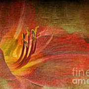 Textured Red Daylily Art Print
